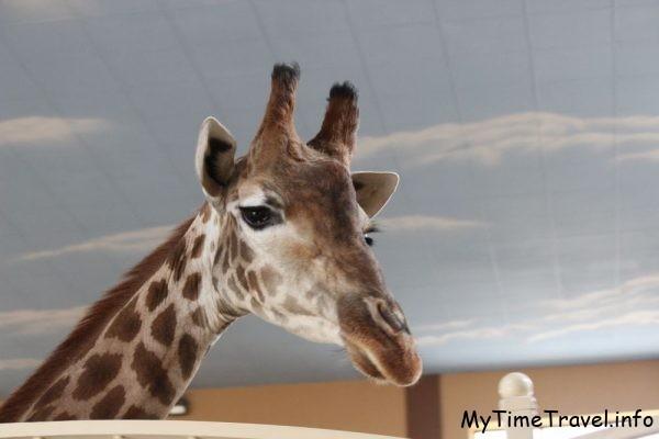 Зоопарк XII месяцев