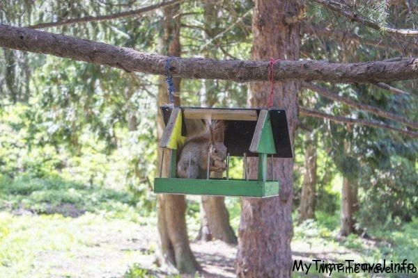 Белка с орешком