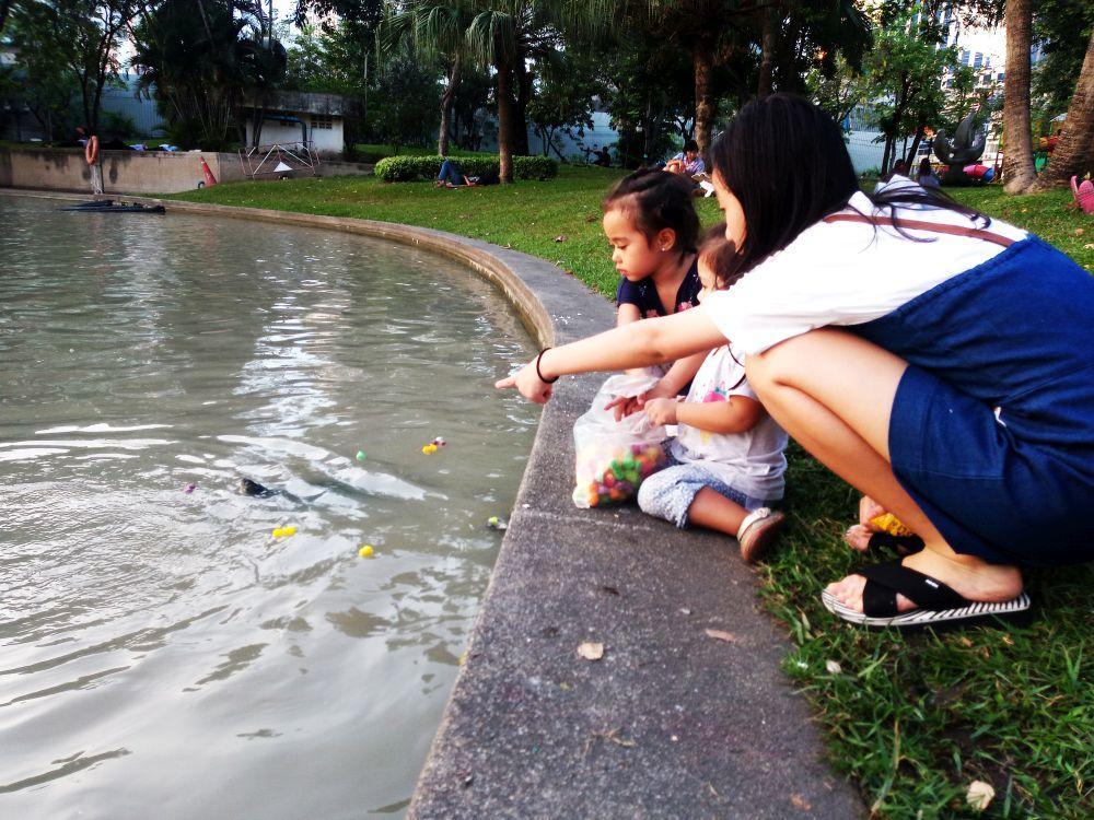 Прогулка в парке: черепахи вместо уток