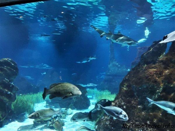 Аквариум в Барселоне: чуть ближе к акулам