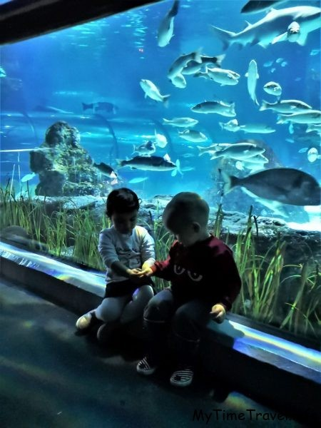Тонель в аквариуме Барселоны