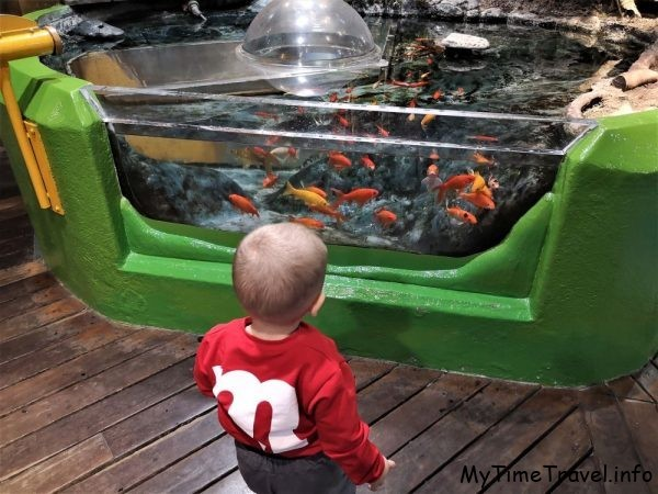 Аквариум с рыбками и куполом