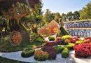 Выставка цветов «Мульт-ленд»: в гостях у сказки