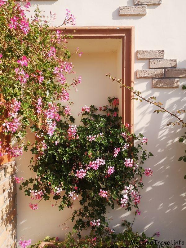 Окно с цветами герани, фото