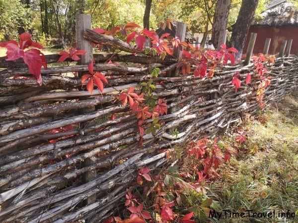 Плетень с красными листьями