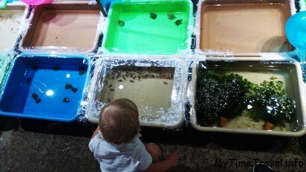 Ребенок смотрит на рыбок и черепашек в емкостях