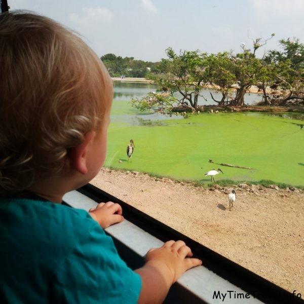 Поездка на автобусе по Сафари парку в Бангкоке