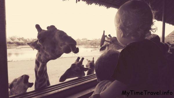 Ребёнок кормит жирафа