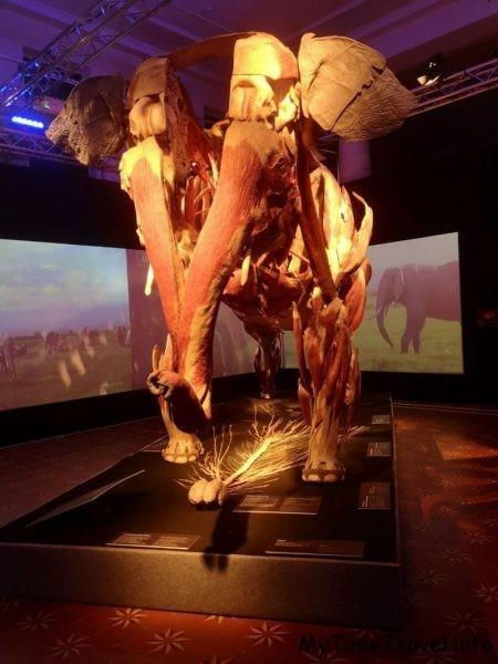 Слон без кожи и нервная система слона