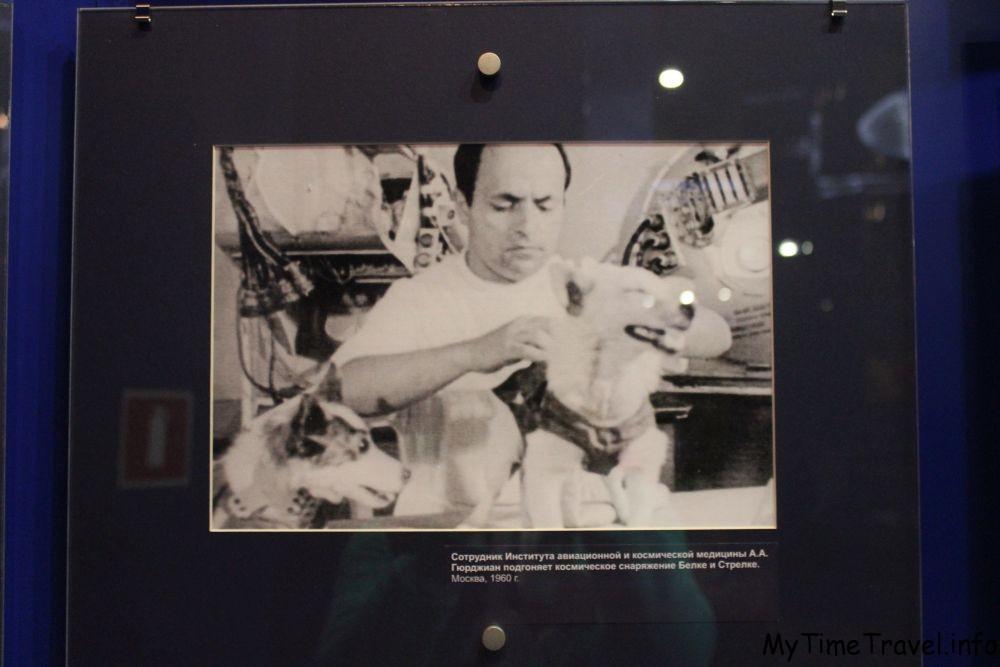 Сотрудник Института авиационной и космической медицины подгоняет снаряжение Белки и Стрелки
