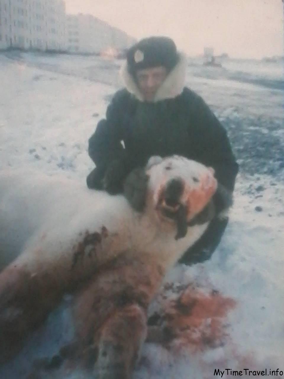 Убитый белый медведь