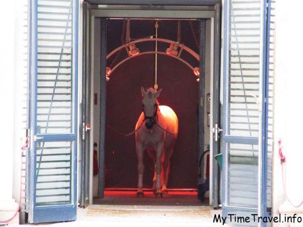 Королевские конюшни в Вене