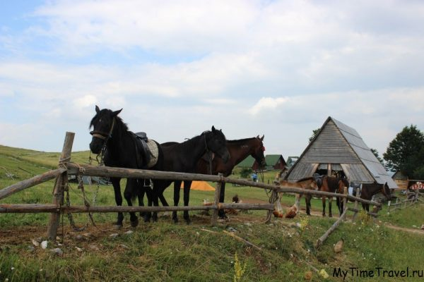 Катание на лошадях в Дурмиторе